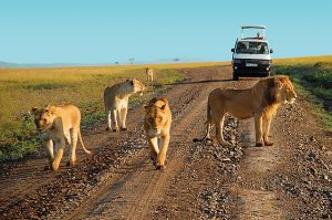 3 days masai mara safaris